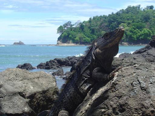 82. Ecotourisme au Costa Rica