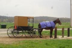103. Séjour en pays Amish