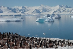 56. Faune en Antarctique 2